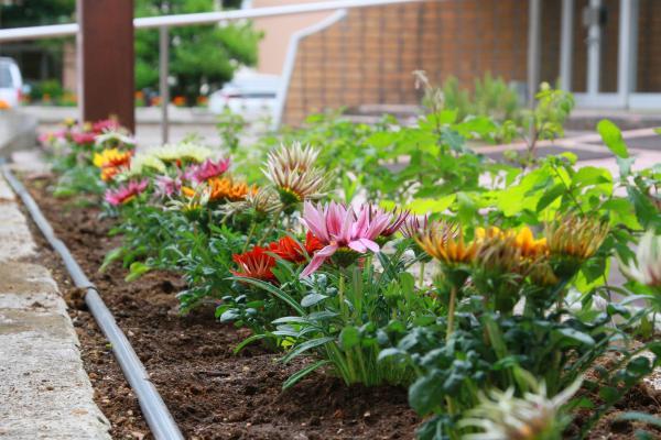 『花いっぱい(3)』の画像