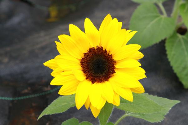 『花いっぱい(4)』の画像