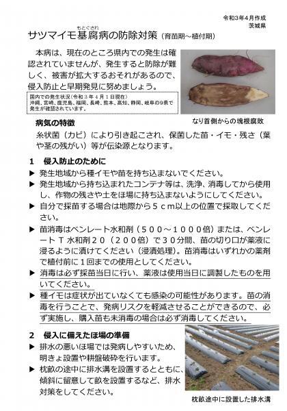 『基腐病茨城県チラシ(1)』の画像