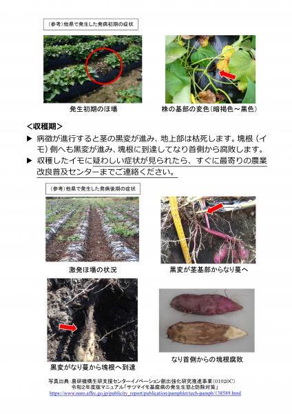 『サツマイモ基腐病防除対策(生育期~収穫期)(2)』の画像